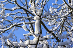 Trees, snow covered in winter Stock Photography