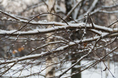 Trees in the snow in December in a park in Moscow. 2016 stock photos