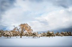 Trees in the snow - Dramatic winter landscape Royalty Free Stock Images