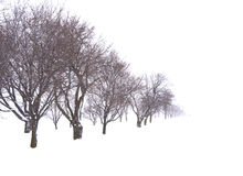 Trees in snow field Royalty Free Stock Photography