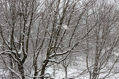 Trees while snow flurry. Winter background. Trees while snow flurry. Winter background Royalty Free Stock Photos