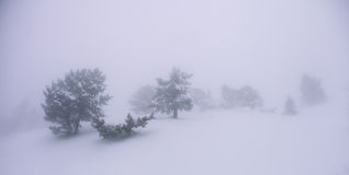 Trees in the snow in the fog Royalty Free Stock Photography