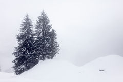 Trees in the Snow Royalty Free Stock Images