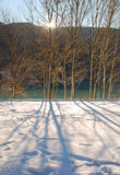 Trees in Snow, Friuli, Italy Royalty Free Stock Photo