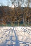 Trees in Snow, Friuli, Italy Royalty Free Stock Photo