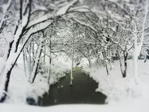 Trees snow and frozen water Royalty Free Stock Photos