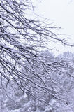 Trees with snow Royalty Free Stock Image