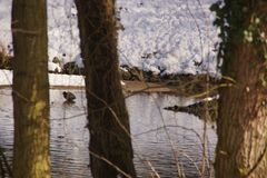 Trees, snow, lake and ducks - France. Landscape wintry, a forest with some snow. In background there is a lake with an icy water. In this icy water there are Stock Images