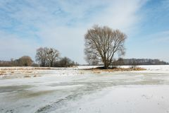 Trees and snow on the meadow, horizon and blue sky. View in sunny winter day stock photography