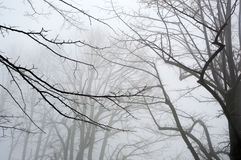 Trees and snow, mist landscape with silhouette branches, winter landscape Stock Photography