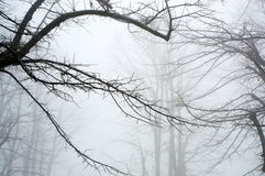 Trees and snow, mist landscape with silhouette branches, winter landscape Stock Photos