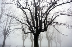 Trees and snow, misty landscape with silhouette branches, winter landscape Royalty Free Stock Photo