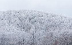 Trees with snow mountain Stock Photography