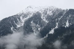 Trees Snow Mountain Royalty Free Stock Image