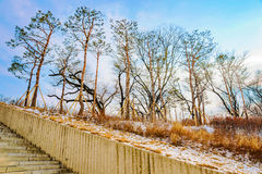 Trees with snow in Namsan park Royalty Free Stock Image