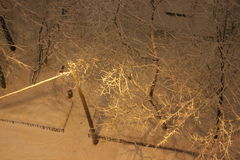 Trees in the snow. Night. The view from the top. Winter. Trees in the snow. The snow on the branches. Snow on the ground. Footprints in the snow. Lantern Royalty Free Stock Photography