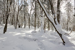 The trees with snow Stock Photography