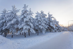 Trees snow and road at sunrise Royalty Free Stock Photo