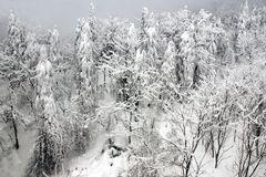 Trees in snow scenery. Xiling Snow Mountain is a national scenic resort, which lies in Sichuan province,China Royalty Free Stock Photos