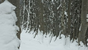 Trees in the snow on the slopes in winter stock video