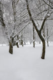 Among trees with snow. Some trees in the snow Stock Image