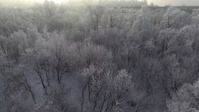 Trees in the snow, span a top view of the sun shines. Aeria 4k video stock video