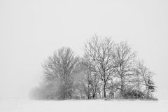 Trees in a snow storm Stock Image