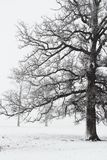 Trees in a snow storm Royalty Free Stock Photo