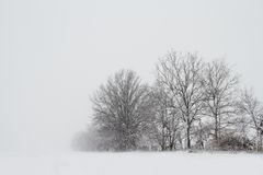 Trees in a snow storm Stock Photos