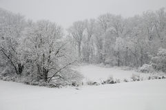Trees in a snow storm Royalty Free Stock Photography