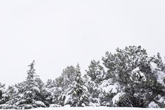 Trees with snow in their cups in a snowy park Royalty Free Stock Images