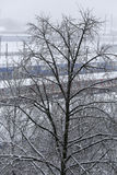 Trees with snow and trains in the background Royalty Free Stock Photos