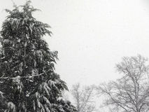 Trees in the snow Stock Images