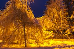 Tungsten Winter. Trees and snow under a tungsten street light. 22 December 2009 Stock Photography