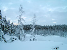 Trees in the snow. Trees under snow in the winter. Frost, snow, winter Royalty Free Stock Photo