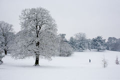 Trees in the snow Stock Photos