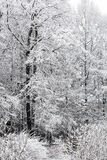 Trees in the snow on a winter day Stock Image