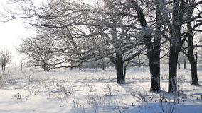 Trees in snow winter field snowing nature landscape sunlight royalty free stock image