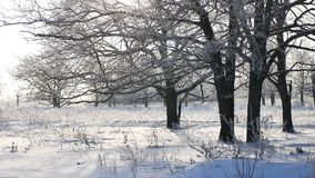Trees in snow winter field snowing nature landscape sunlight stock photos