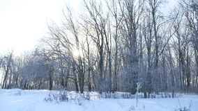 Trees snow winter field snowing nature landscape sunlight royalty free stock photo