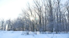 Trees snow winter field snowing nature landscape sunlight royalty free stock photos