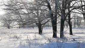 Trees in snow winter field snowing nature landscape sunlight stock footage