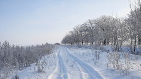 Trees in snow winter field snowing nature landscape sunlight grass in the snow and the road stock video footage