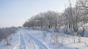 Trees in snow winter field snowing nature landscape sunlight grass in the snow and the road royalty free stock photography