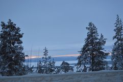 Trees in the snow in the winter forest. royalty free stock photos