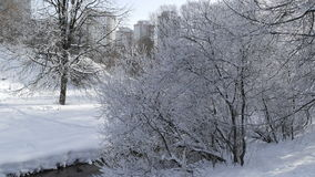 Trees in snow. Trees in winter snow in Moscow Royalty Free Stock Photography