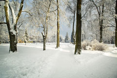 Trees in snow in the winter park. Royalty Free Stock Photo