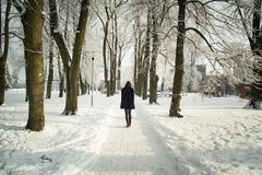 Trees in snow in the winter park. Park alley. Latvia. Europe stock image