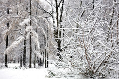 Trees with snow in winter park Stock Photos