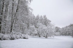 Trees with snow in winter park Royalty Free Stock Photography